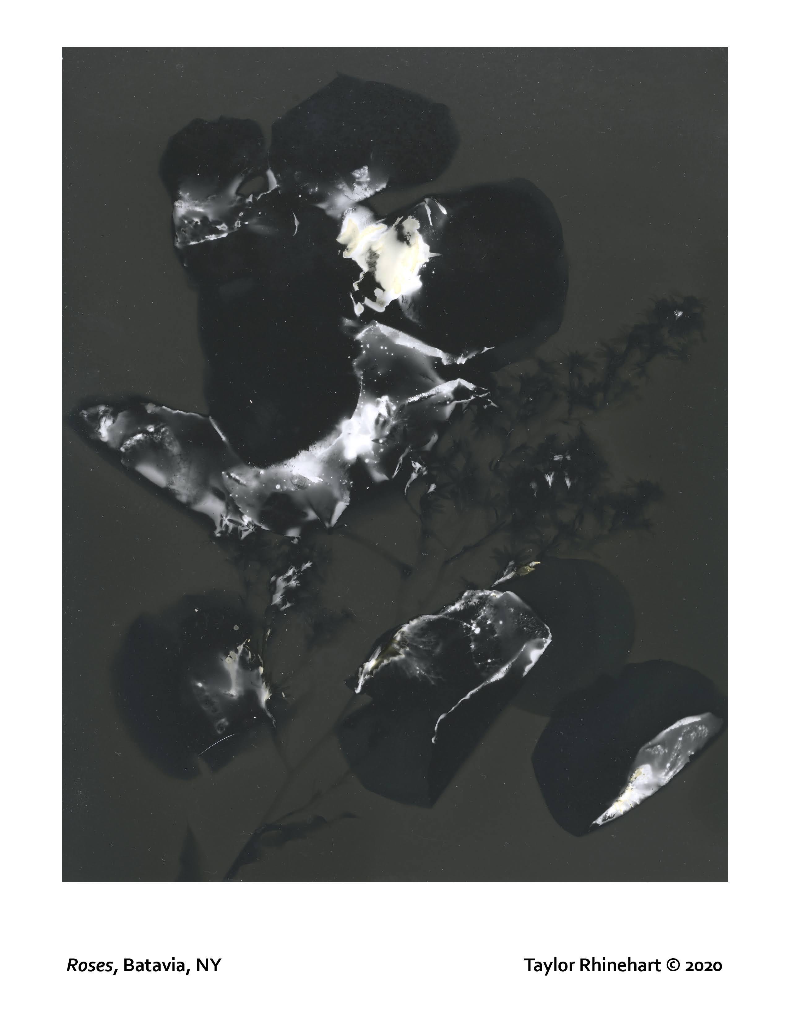 Taylor Rhinehart lumen print