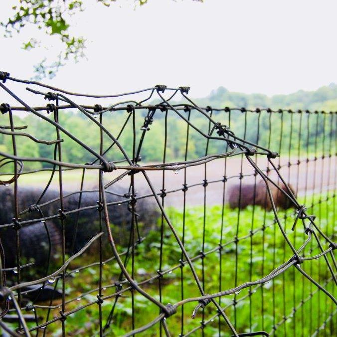 wire fence scene
