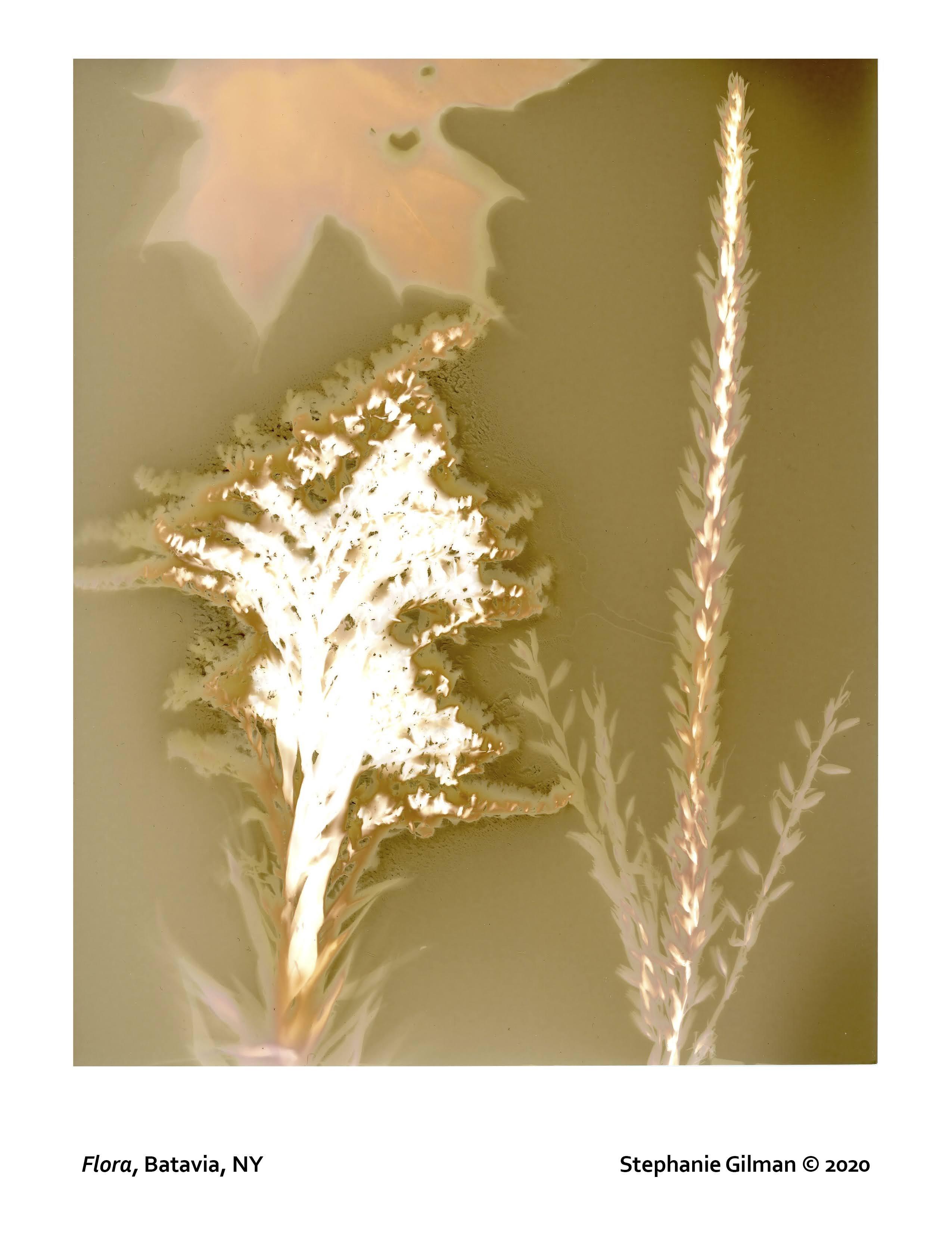 Stephanie Gilman lumen print