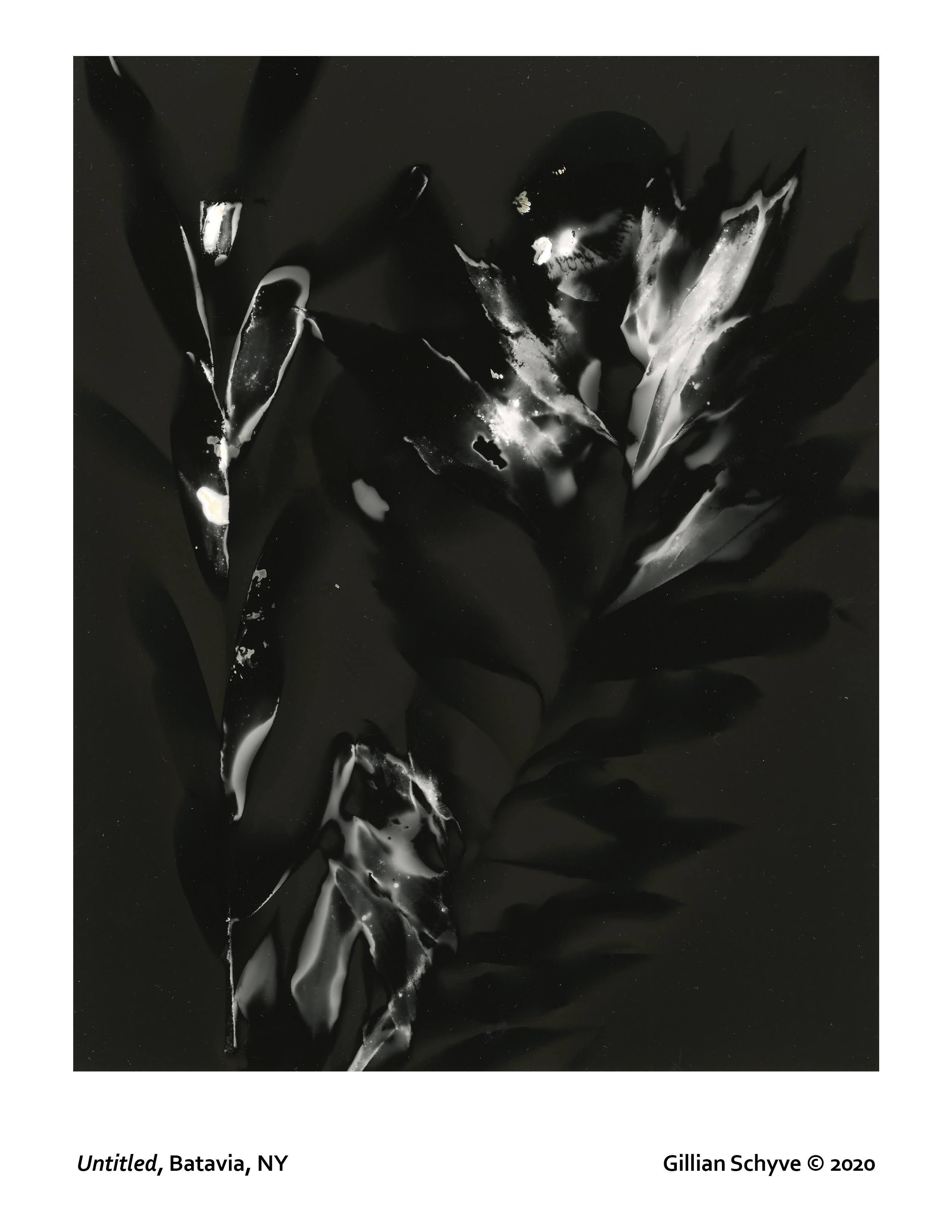Gillian Schyve lumen print