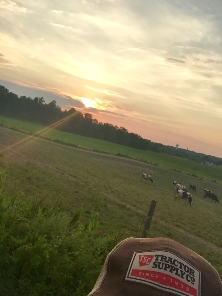 Speers photo of sunset over pasture with cows